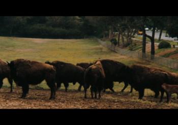 Minute 89 – Bison Park